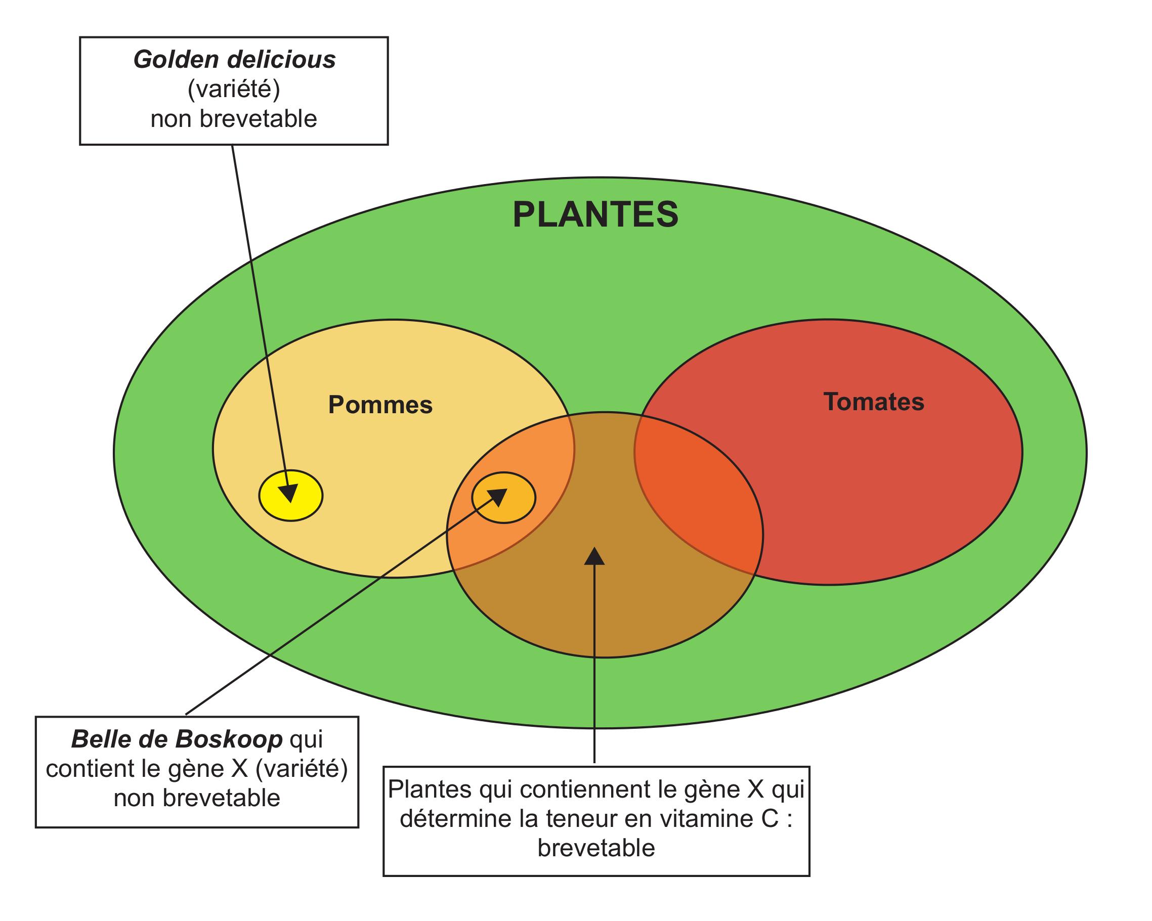 vitamine plante