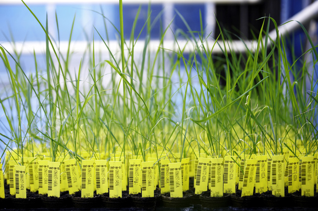 Plantes culture in vitro dans un laboratoire