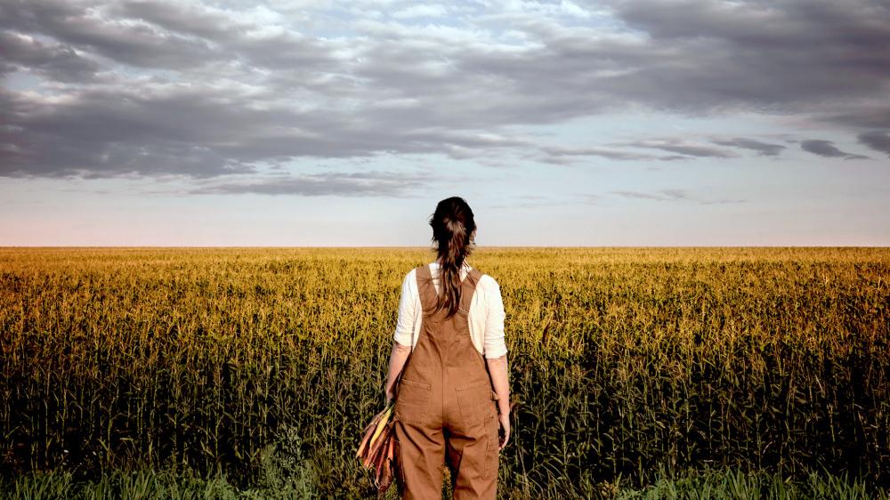 Canada – Des contaminations par des OGM aux conséquences désastreuses