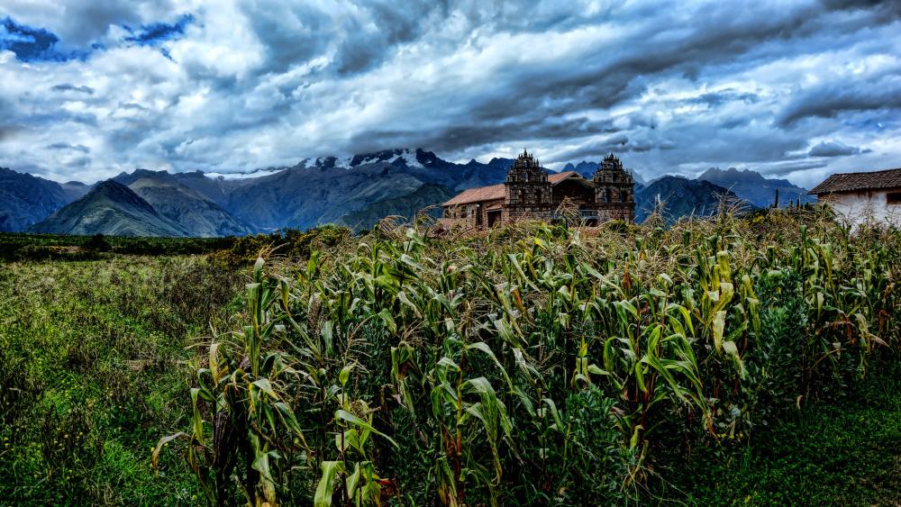 Pérou : 15 ans de prolongation du moratoire sur les cultures d'OGM