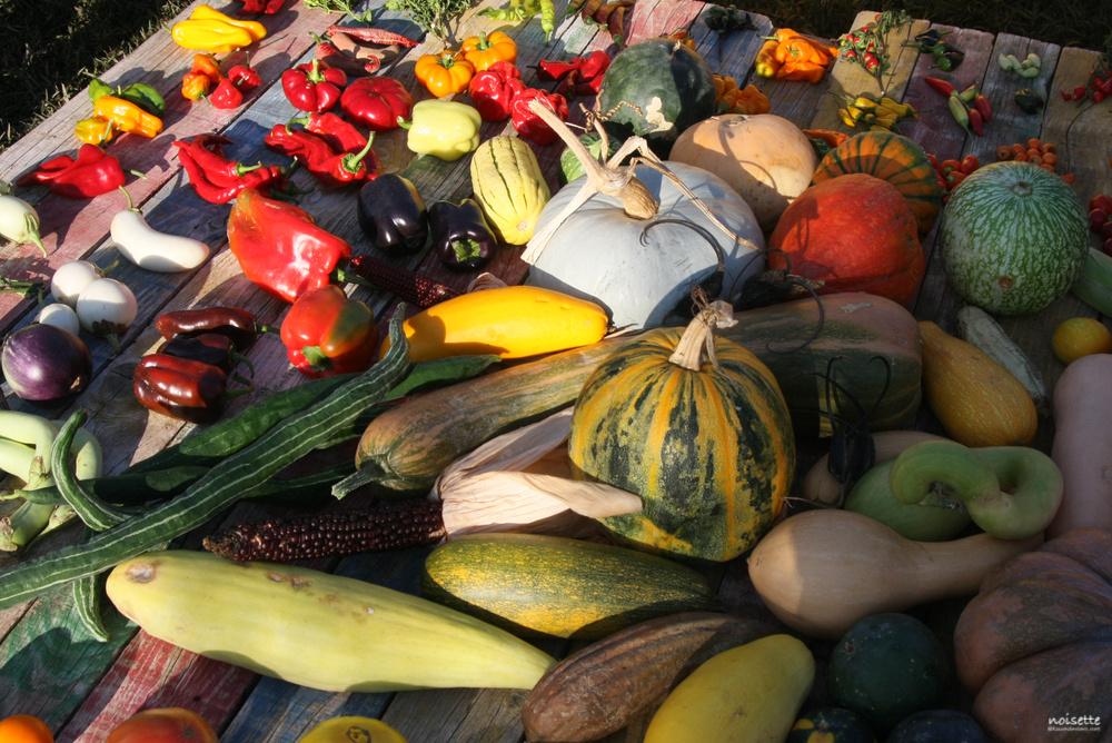France : un catalogue des variétés plus « transparent » ?