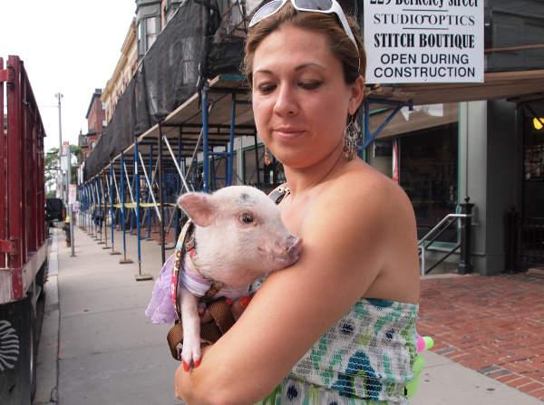 Adopter Un Cochon Ogm Nain Inf Ogm
