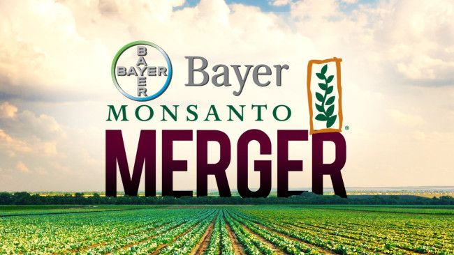 Rachat de Monsanto par Bayer : accordé sous conditions